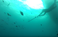 Spearfishing in Bay of Plenty